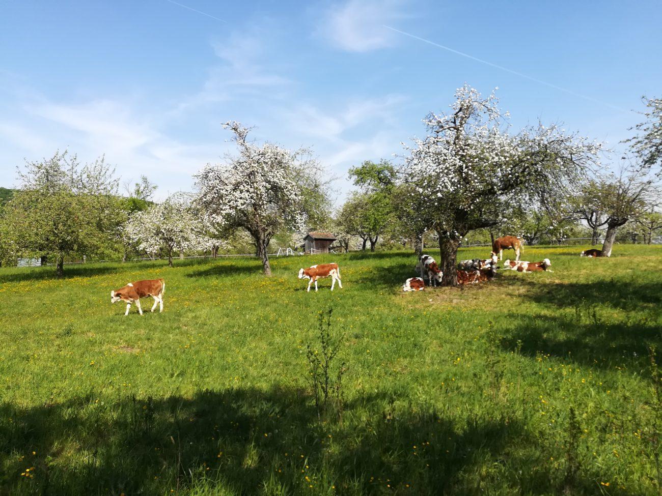 Jungtiere auf der Weide
